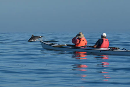 kayakers with dolphins